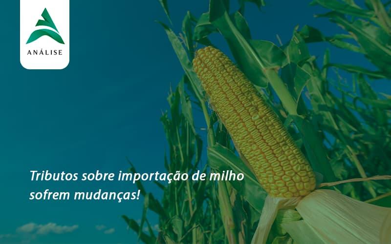 Tributos Sobre Importação De Milho Sofrem Mudanças! Analise - Analise Assessoria Contábil e Empresarial - Contabilidade em Uberaba │ MG